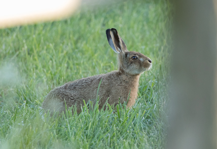 Leveret, Watergate Road