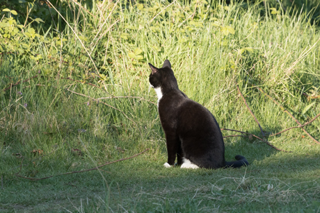 Cat in a Nature Reserve