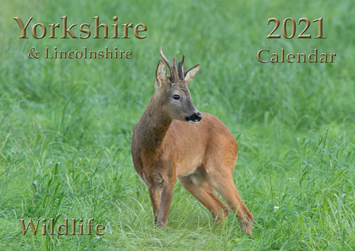 Yorkshire Wildlife Calendar 2021, front cover